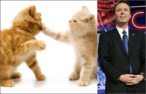 Catsplusedwards